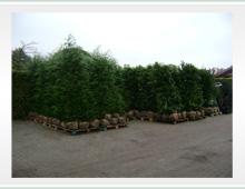 Planten klaar voor transport