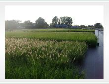 Containerveld grassen